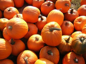 Fall Festivals and Pumpkin Patches